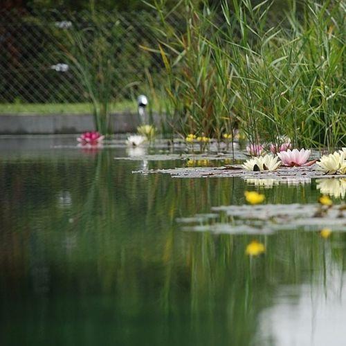 Pool, Zisterne oder Teich mit Dichtschlämme abdichten